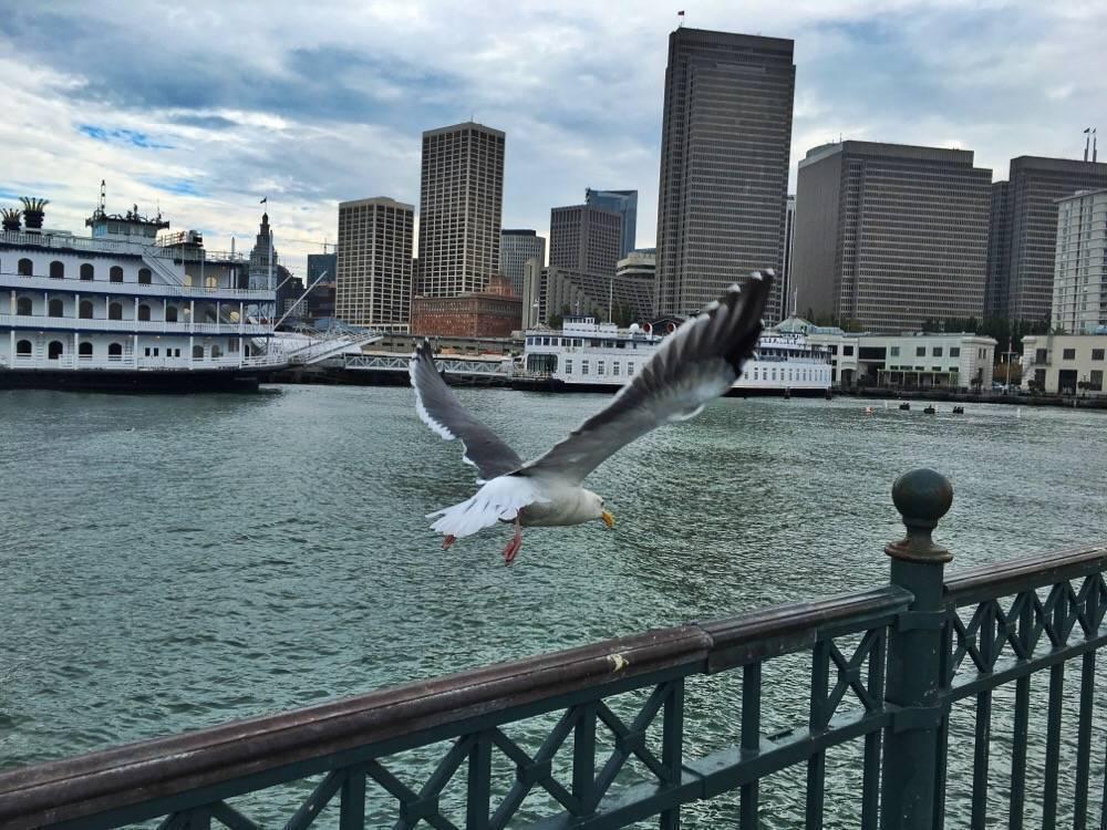 San Francisco in vogelvlucht