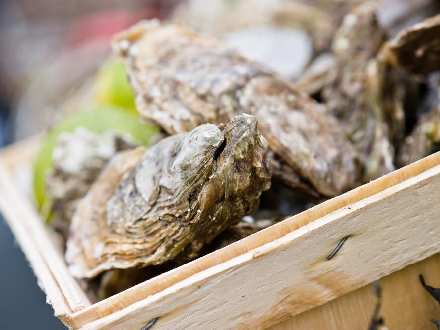 recept lauwwarme oesters