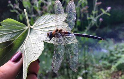libelle redden