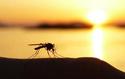 tips tegen muggen