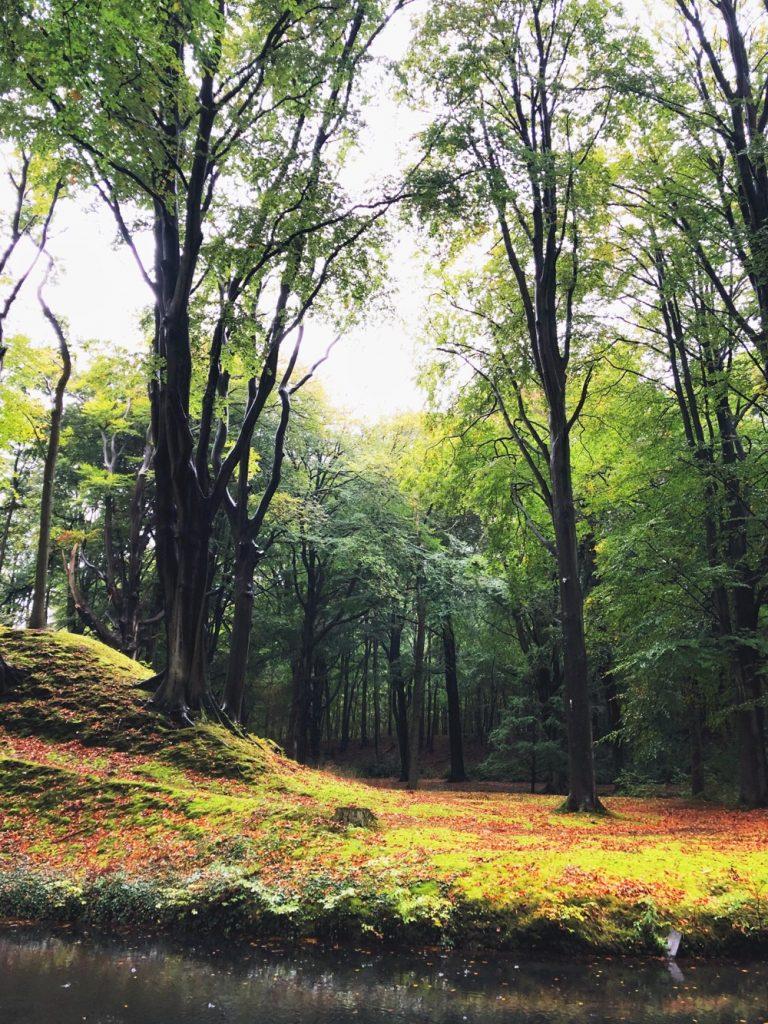 herfst in Elswout