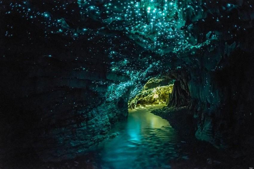 Glowworm Caves in Waitomo
