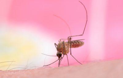 10 tips tegen jeukende muggenbulten