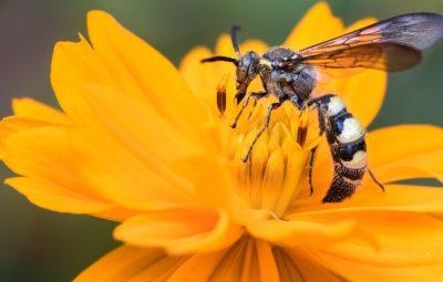 wat kun je doen tegen wespen