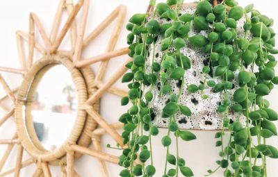 erwtenplant inspiratie