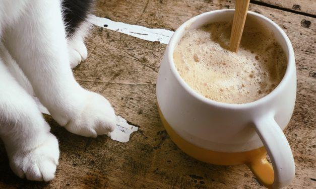 Kickstart van je dag: Maca latte met cacao